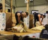 1Er Run Catégorie Senior - 24H De La Tonte- Crédit Photo Phoebus Communication (38)_Preview
